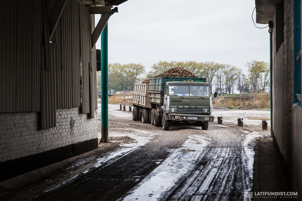 Доставка сахсвеклы на Теофипольский сахарный завод